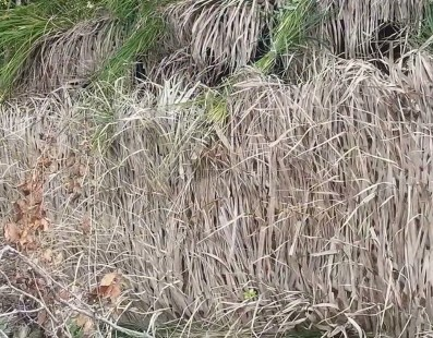 Duck Blind Build Time Lapse