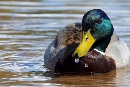 Illinois Duck Hunting Walk-In Areas