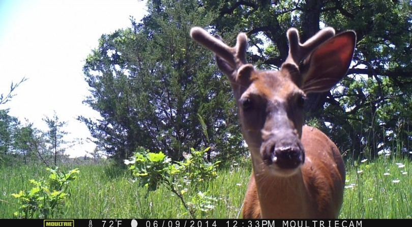 Have Whitetail Tactics Blurred the Lines Between Hunting and Raising Livestock?